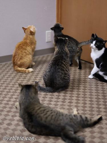 たまゆら猫